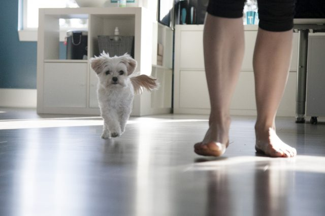 white dog and woman walking barefoot